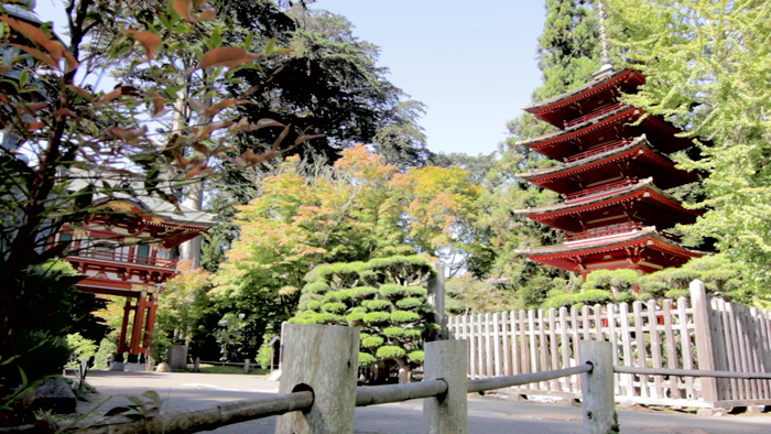 dax-victorino-films_san-francisco-japanese-tea-garden3